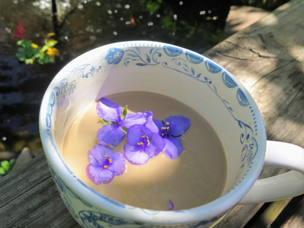 Ohio spiderwort flowers in coffee!